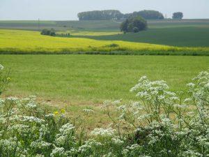 Wiese Picardie